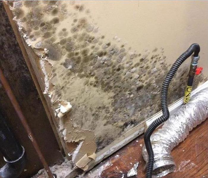 Mold Remediation Three Places to Check for Mold Growth